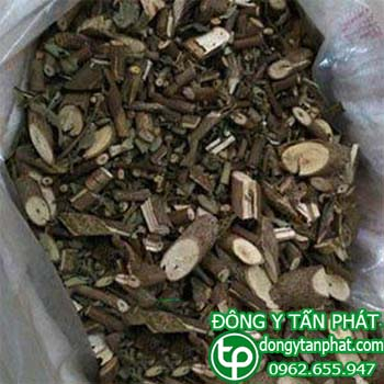 Công ty cung cấp cây an xoa tại Phú Thọ giao hàng nhanh