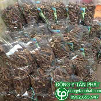 Công ty cung cấp Chuối hột rừng tại Thái Nguyên giao hàng nhanh