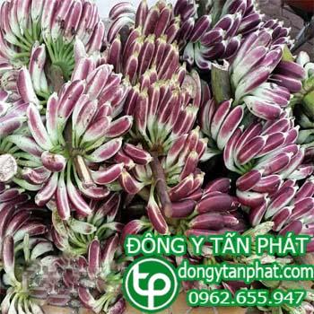 Công ty cung cấp Chuối hột rừng tại Tiền Giang giao hàng nhanh