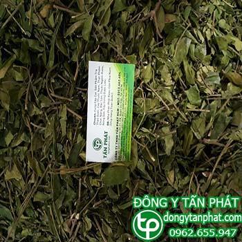 Cung cấp dây thìa canh dây thìa canh tại Điện Biên tăng cường sức khỏe
