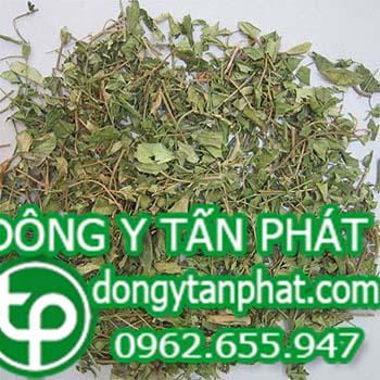 Địa chỉ mua bán dây thìa canh tại Ninh Thuận uy tín