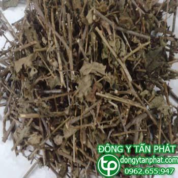 Ở đâu bán cà gai leo tại Ninh Thuận giá tốt???