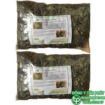Phân phối mua bán cây xạ đen tại Thanh Hóa giá tốt