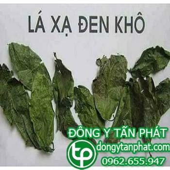 Trung tâm mua bán cây xạ đen tại Thái Nguyên giá sỉ